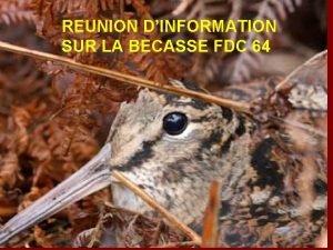 REUNION DINFORMATION SUR LA BECASSE FDC 64 Sommaire