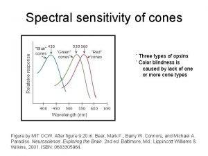 Relateive response Spectral sensitivity of cones Blue cones