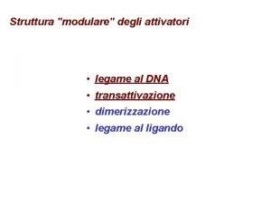 Struttura modulare degli attivatori legame al DNA transattivazione