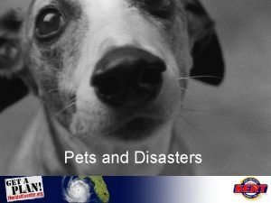 Pets and Disasters Pets in Disasters After Hurricane