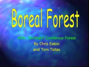 AKA Northern Coniferous Forest By Chris Eaton and
