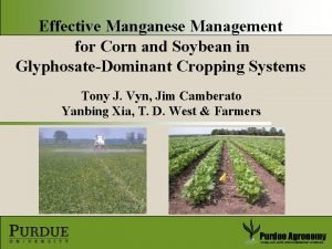 Effective Manganese Management for Corn and Soybean in