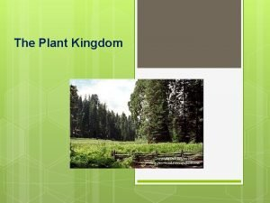 The Plant Kingdom Plant Characteristics Plant Characteristics Multicellular