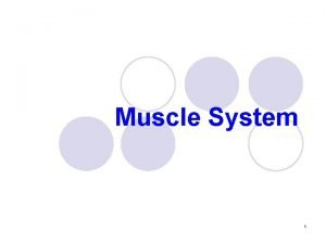 Muscle System 1 Muscular system l Includes all