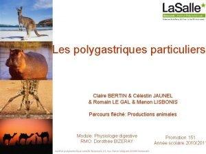 Les polygastriques particuliers Claire BERTIN Clestin JAUNEL Romain