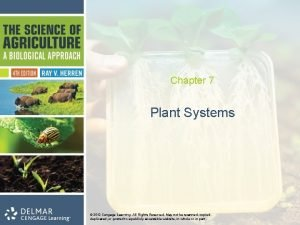 Chapter 7 Plant Systems 2012 Cengage Learning All