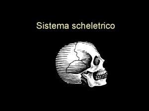 Sistema scheletrico Il sistema scheletrico Definizione Tutte le