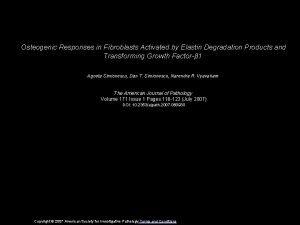 Osteogenic Responses in Fibroblasts Activated by Elastin Degradation