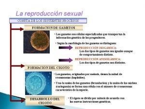 La reproduccin sexual CONSTA DE LOS SIGUIENTES PROCESOS