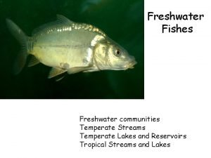 Freshwater Fishes Freshwater communities Temperate Streams Temperate Lakes