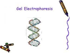 Gel Electrophoresis Agarose Gel Electrophoresis Electro flow of