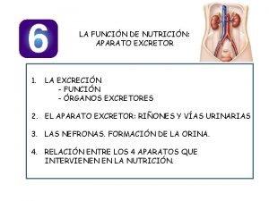LA FUNCIN DE NUTRICIN APARATO EXCRETOR 1 LA