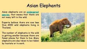 Asian Elephants Asian elephants are an endangered species