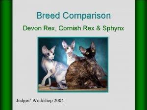 Breed Comparison Devon Rex Cornish Rex Sphynx Judges