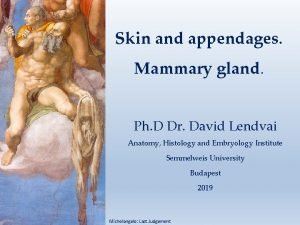 Skin and appendages Mammary gland Ph D Dr