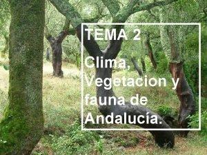 TEMA 2 Clima Vegetacion y fauna de Andaluca