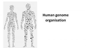Human genome organisation Human genome The human genome