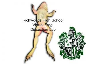 Richwoods High School Virtual Frog Dissection Lab Tympanum