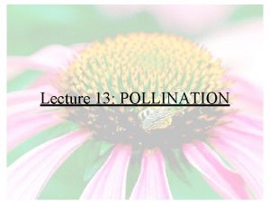 Lecture 13 POLLINATION What is pollination Pollination The