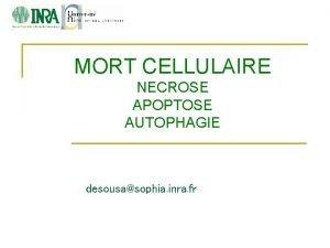 MORT CELLULAIRE NECROSE APOPTOSE AUTOPHAGIE desousasophia inra fr
