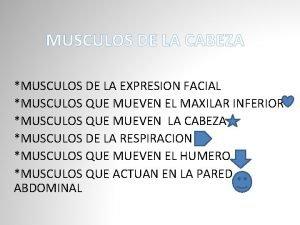MUSCULOS DE LA CABEZA MUSCULOS DE LA EXPRESION