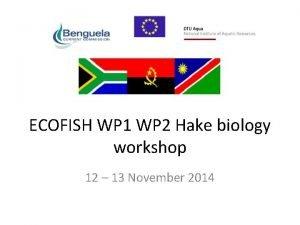 ECOFISH WP 1 WP 2 Hake biology workshop