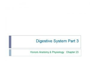 Digestive System Part 3 Honors Anatomy Physiology Chapter