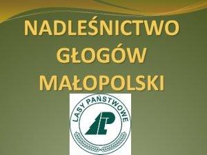 NADLENICTWO GOGW MAOPOLSKI Nadlenictwo Gogw Mp Nasze nadlenictwo
