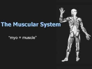 The Muscular System myo muscle Muscular System There