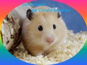 Les hamsters par Coralie Beaulieu Table des matires