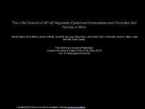 The cRel Subunit of NFB Regulates Epidermal Homeostasis