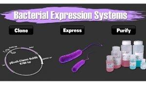 PROTEINAS RECOMBINANTES El ADN recombinante es una molcula