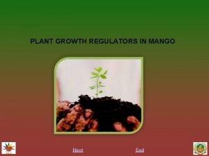 PLANT GROWTH REGULATORS IN MANGO Next End INTRODUCTION