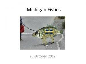 Michigan Fishes 23 October 2012 Michigan Fishes Michigan