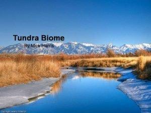 Tundra Biome By Mick Harris Tundra A tundra