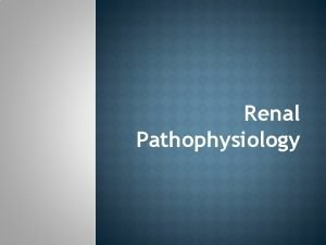 Renal Pathophysiology Briefly kidney anatomy physiology and function