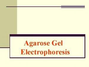 Agarose Gel Electrophoresis Purposes n To understand the