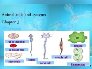 Animal cells and systems Chapter 3 white blood