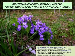Viola uniflora L Hemerocallis minor Miller Viola sachalinensis