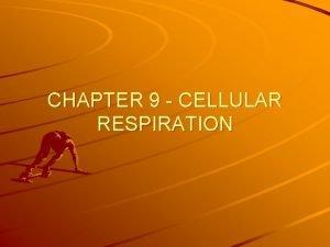 CHAPTER 9 CELLULAR RESPIRATION CELLULAR RESPIRATION Process that