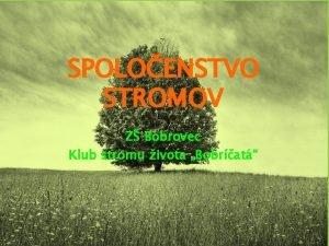 SPOLOENSTVO STROMOV Z Bobrovec Klub stromu ivota Bobrat