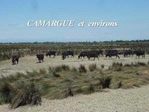 CAMARGUE et environs Avignon Avignon Eglise ND des