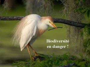 Biodiversit en danger La biodiversit est la dynamique