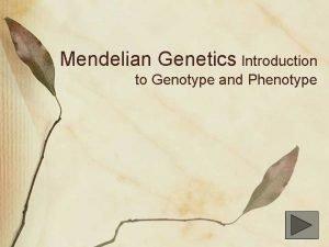 Mendelian Genetics Introduction to Genotype and Phenotype Gregor