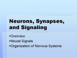 Neurons Synapses and Signaling Overview Neural Signals Organization