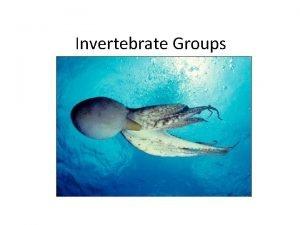 Invertebrate Groups 1 Sponges Sponges Sponges pump water