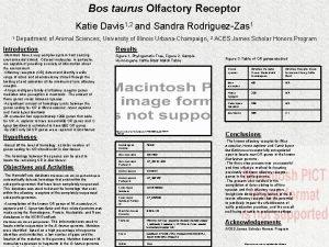 Bos taurus Olfactory Receptor Katie Davis 1 2