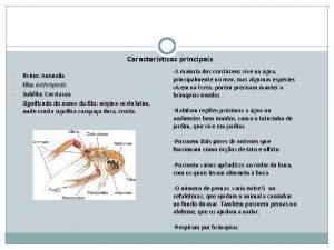 Caractersticas principais Reino Animalia Filo Arthrpoda Subfilo Crustacea