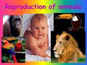 Reproduction of animals Why do animals reproduce Animals