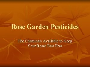 Rose Garden Pesticides The Chemicals Available to Keep
